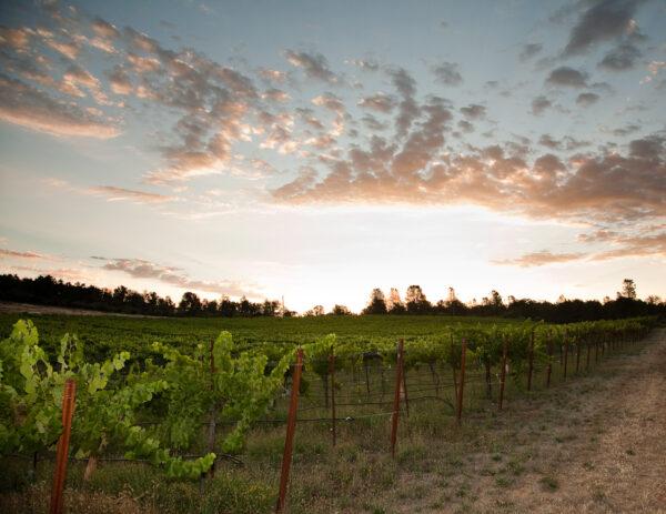 Clavey Vineyards and Wine Sierra Foothills Nevada City California